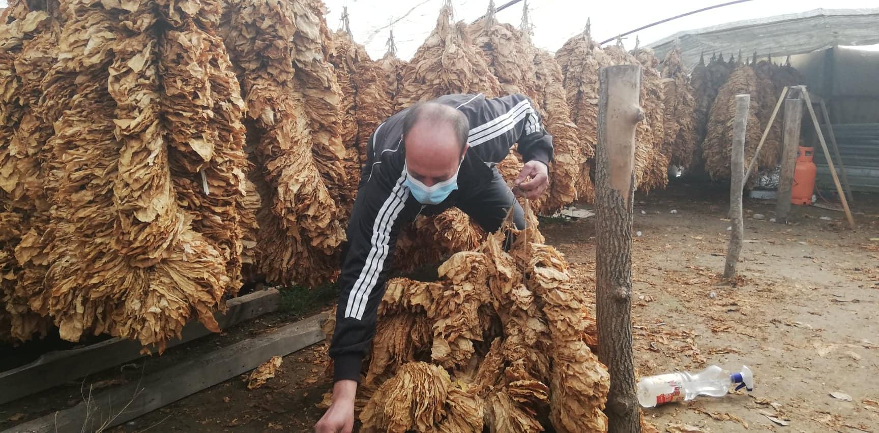 Тони тутун остана неоткупен во струмичко, тутунарите бараат откупот да продолжи до 31 март